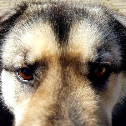 Eén van de honden van Wim